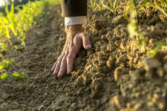 Senior man's hand touching clay of the earth Royalty Free Stock Images