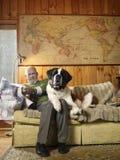 Senior Man Sharing Sofa With Large St Bernard Dog. Senior man reading newspaper while sharing sofa with large St Bernard dog Royalty Free Stock Images