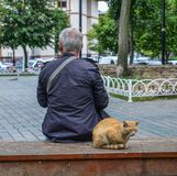 A senior man sitting at the park with cat stock images