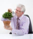 Senior man small tree. Senior man inspecting a small tree Royalty Free Stock Photography