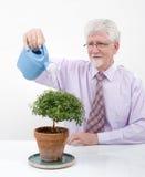 Senior man small tree. Senior man watering a small tree Royalty Free Stock Photography