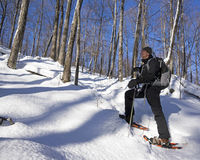 Senior Man on Snowshoes. An active man snowshoes through a forest trail in Mont Orford Park, Quebec Stock Image