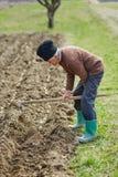 Senior man sowing potatoes Royalty Free Stock Image