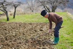 Senior man sowing potatoes Stock Photo