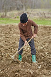 Senior man sowing potatoes Stock Photos