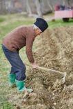 Senior man sowing potatoes Stock Images