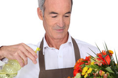 Senior man spraying flowers Royalty Free Stock Photography