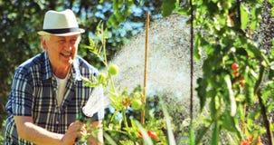 Senior man spraying water on plant