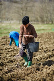 Senior man spreading fertilizer Royalty Free Stock Images