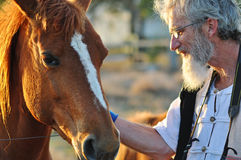 Senior man stroking big horse portrait close up. An intimate,soft portrait of a mature Australian senior man gently stroking the neck of his large chestnut horse Royalty Free Stock Photo