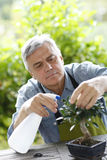 Senior man taking care of plants Stock Photo