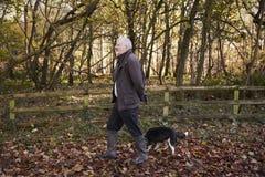 Senior Man Taking Dog For Walk In Autumn Landscape Stock Images