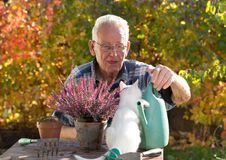Old man with cat doing gardening work. Senior man transplanting flower in garden while small white cat sitting on table and making his company Royalty Free Stock Images