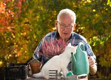 Old man with cat doing gardening work. Senior man transplanting flower in garden while small white cat sitting on table and making his company Royalty Free Stock Image