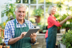 Senior man using digital tablet while woman working at greenhouse. Portrait of senior men using digital tablet while women working in background at greenhouse Royalty Free Stock Image
