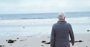 Senior man walking on the beach. Rear view of senior man walking on the beach stock video