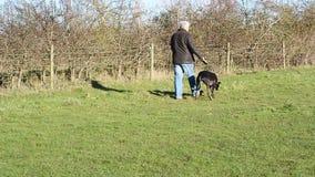 Senior man walking dog on a lead or leash. stock video