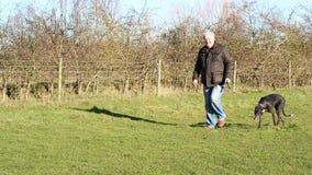 Senior man walking dog and waving. stock video