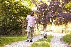 Senior Man Walking With Pet Bulldog In Countryside royalty free stock image