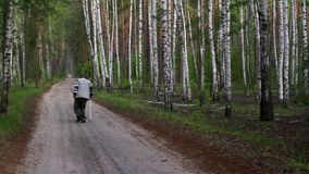 Senior man with walking stick has morning practice on a country road stock video
