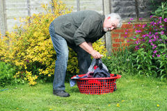 Senior man with washing in a basket. A senior man sorting out the laundry to hang out to dry Stock Photography