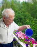 Senior Man Watering Flowers Royalty Free Stock Photo