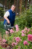 Senior man watering flowers in the garden Stock Images