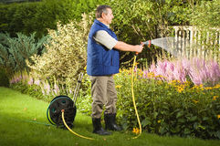 Senior man watering flowers in the garden stock photography