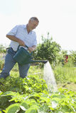 Senior Man Watering Plants In Allotment Royalty Free Stock Photos