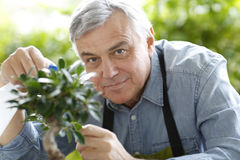 Senior man watering plants Stock Images