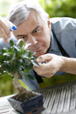 Senior man watering plants Royalty Free Stock Photography
