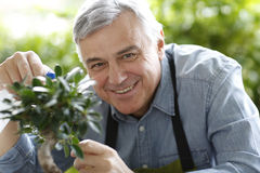 Senior man watering plants Stock Photography
