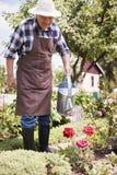 Senior man watering plants Stock Photo