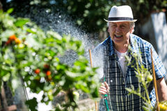 Senior man watering plants with a hose Stock Images