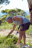 Senior man weeding Stock Photo