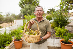 Senior man with a white grapes basket in the hands. Royalty Free Stock Photos
