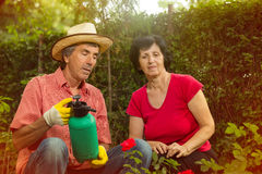 Senior man and woman working in the garden Royalty Free Stock Photography