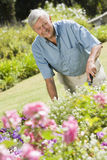 Senior man working in garden. Using trowel Stock Photo