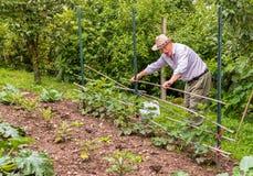 Senior man working in the garden Stock Photography