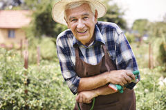 Senior man working in garden Stock Image