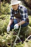 Senior man working in garden Stock Photos