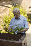 Senior man working in his backyard. Cutting up plants he has pruned in the garden and placing them in a composting bin Stock Photos