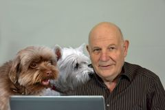 Senior man works at his computer, his dogs are trying to help him. Man sits at the computer and tries to work His dogs keep him company and watch with interest royalty free stock photos