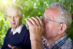 Senior men in garden Stock Photography