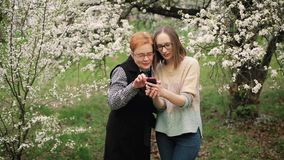 Senior mother and her adult daughter watching photos in blooming garden. Mother`s day concept. Family values. Slow motion stock footage