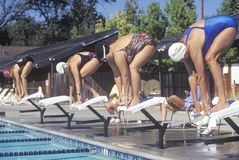 Senior Olympic Swimming competition, Royalty Free Stock Image