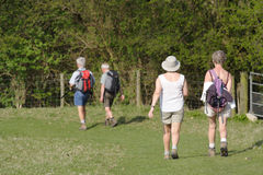 Senior people walking. Two older mature couples walking through a field stock images