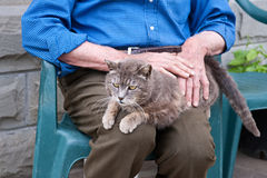 Senior petting a cat. Elderly man caressing her cat Stock Image