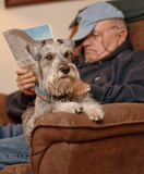 Senior Reading and Relaxing with Dog. Senior man sitting, reading and relaxing with his best friend, a dog stock photography