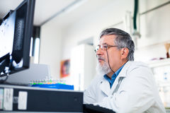 Senior researcher using a computer in the lab Stock Photo